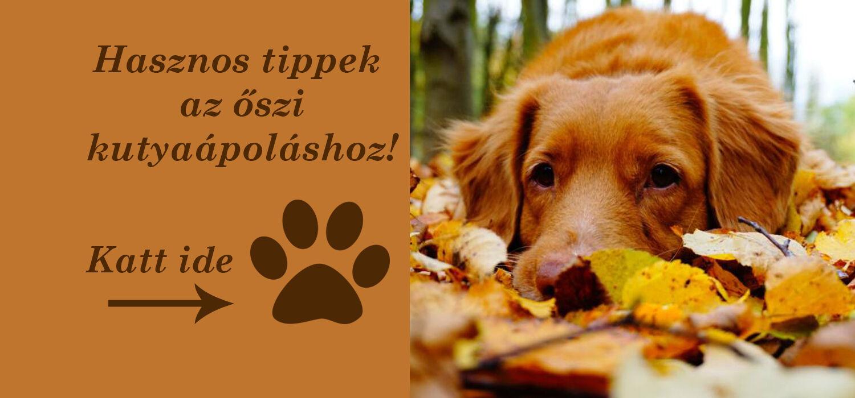 Őszi kutya